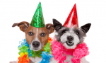 Лучшие идеи подарков для собак
