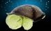 фото Проектор звездного неба Черепаха музыкальная #2