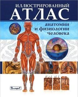 Иллюстрированный атлас анатомии и физиологии человека