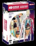 Объемный пазл анатомической модели 'Тело человека'
