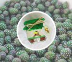 Подарок Варенье из еловых шишек