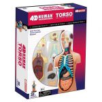 Объемная анатомическая модель 'Тело человека'