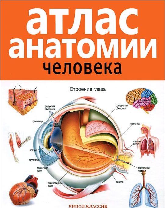 Купить Атлас анатомии человека, Е. Красичкова, 978-5-386-01747-7, 978-5-386-04919-5, 978-5-386-10417-7