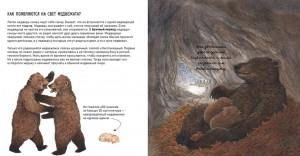 фото страниц Животные в природе. Медведь #2