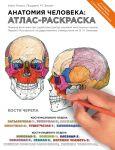 Книга Анатомия человека. Атлас-раскраска