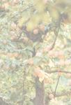 фото страниц Правильная организация приусадебного участка для повышения урожайности #7