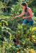 фото страниц Правильная организация приусадебного участка для повышения урожайности #6