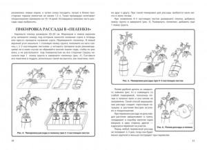 фото страниц Энциклопедия огородника для новичков в понятных рисунках и схемах. Увидел - повтори #5
