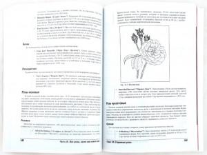 фото страниц Розы для чайников #3