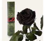 фото Долгосвежая роза Черный Бриллиант в подарочной упаковке #3