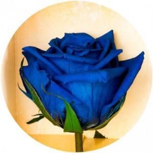 фото Долгосвежая роза Синий Сапфир в подарочной упаковке #3