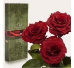 Подарок Три долгосвежих розы Багровый Гранат в подарочной упаковке