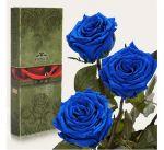 Подарок Три долгосвежих розы Синий Сапфир в подарочной упаковке
