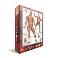 Пазл EuroGraphics 'Мышцы человека' (6000-2015)