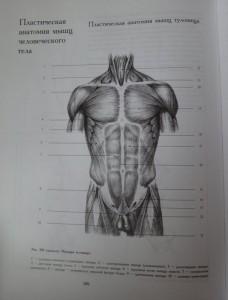 фото страниц Рисунок. Основы учебного академического рисунка #17