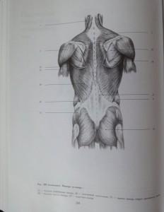 фото страниц Рисунок. Основы учебного академического рисунка #18