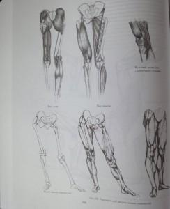 фото страниц Рисунок. Основы учебного академического рисунка #20