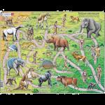 Пазл 'Теория эволюции'