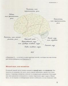 фото страниц В моей голове. Как устроен мозг и зачем он нам нужен #3
