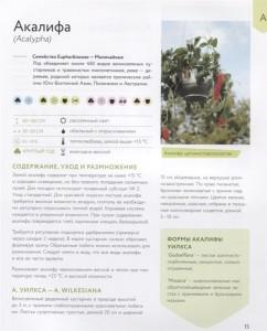 фото страниц Зеленый оазис. Комнатные растения от А до Я #4