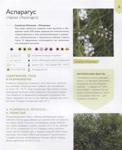 фото страниц Зеленый оазис. Комнатные растения от А до Я #5