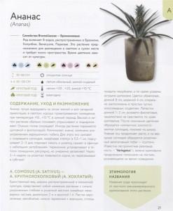 фото страниц Зеленый оазис. Комнатные растения от А до Я #3