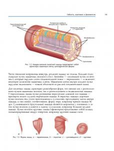 фото страниц Анатомия стретчинга. Большая иллюстрированная энциклопедия #11