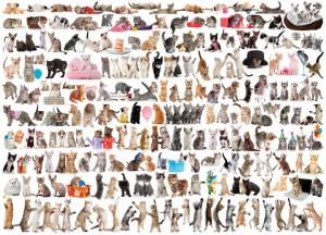 фото Пазл Eurographics 'Мир кошек', 1000 элементов (6000-0580) #2