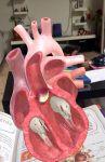 фото страниц Атлас анатомии человека #9