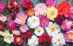 фото страниц Пионы. Роскошные цветы для дома и сада #6