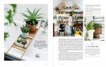 фото страниц Міські джунглі. Або як рослини допомагають нам творити гармонію і стиль #7