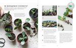 фото страниц Міські джунглі. Або як рослини допомагають нам творити гармонію і стиль #8