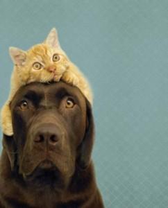 фото страниц Почему собаки лучше кошек #6