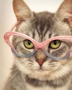 фото страниц Почему собаки лучше кошек #7
