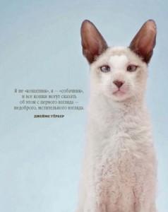 фото страниц Почему собаки лучше кошек #10