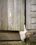 фото страниц Почему собаки лучше кошек #5