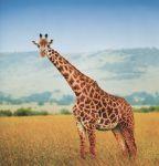 фото страниц Необыкновенные приключения Пети в Африке #5