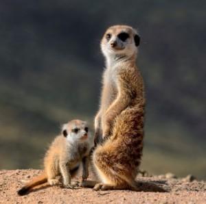 фото страниц Необыкновенные приключения Пети в Африке #3