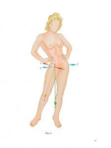 фото страниц Нижняя конечность. Функциональная анатомия #9