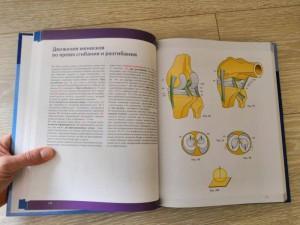 фото страниц Нижняя конечность. Функциональная анатомия #14