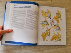 фото страниц Нижняя конечность. Функциональная анатомия #16
