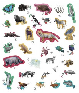 фото страниц Експедиція за дивовижними тваринами #13