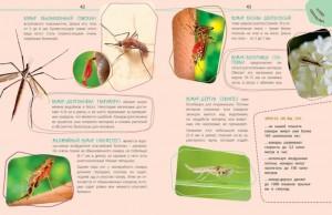 фото страниц Такие незнакомые эти насекомые #7
