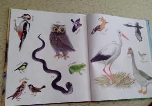 фото страниц Маленькие сказки про ёжиков #3
