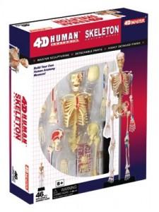Объемная анатомическая модель 'Скелет человека'
