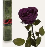 Подарок Долгосвежая роза 'Фиолетовый аметист' в подарочной упаковке (5 карат на среднем стебле)