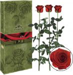 Подарок Три долгосвежих розы 'Алый рубин' в подарочной упаковке (5 карат на коротком стебле)