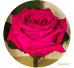 Подарок Долгосвежая роза 'Малиновый родолит' (5 карат на коротком стебле)