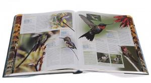 фото страниц Птицы. Полная энциклопедия #2