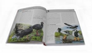 фото страниц Птицы. Полная энциклопедия #3